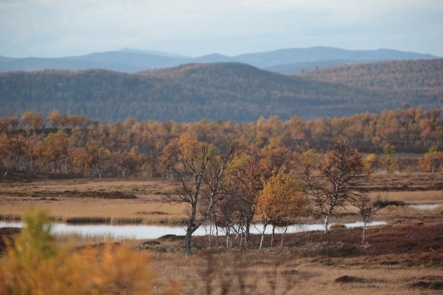 Flatruet, Jämtland. Foto: Börje Olsson.