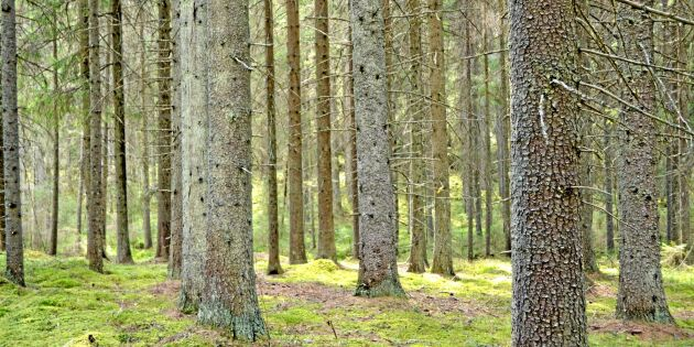 Ändrat klimat kan ge lägre tillväxt