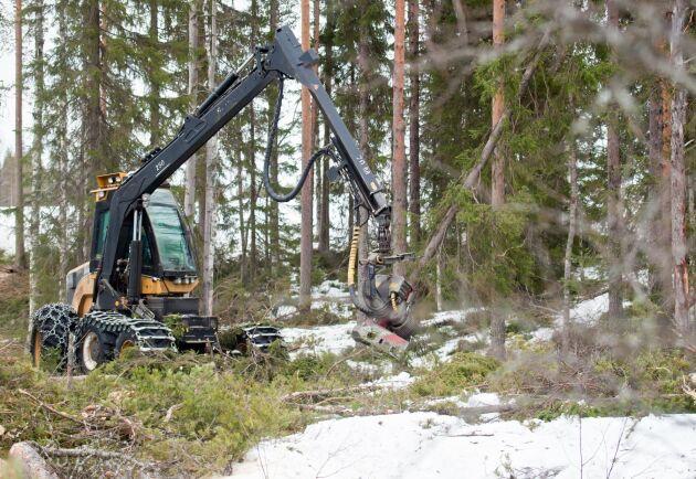 Boende i närheten av skogsområdet menar att de hittat ett 30-tal rödlistade arter i området och vill därför att avverkningen ska stoppas. Arkivbild.