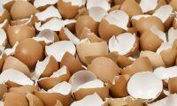 Lokalt motstånd knäckte ägg-planer