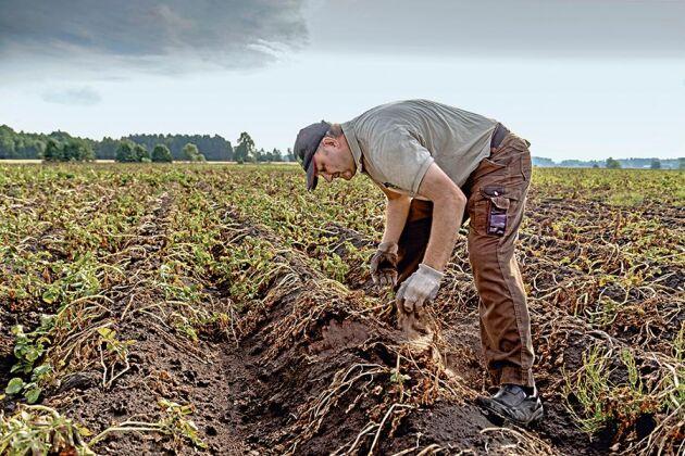 De senaste årens naturkatastrofer och hur de har slagit mot Sveriges bönder skildras i boken. Fredrik Haglund i Vedum drabbad av torkan 2018.