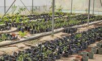 Växter som kan återställa förgiftad mark