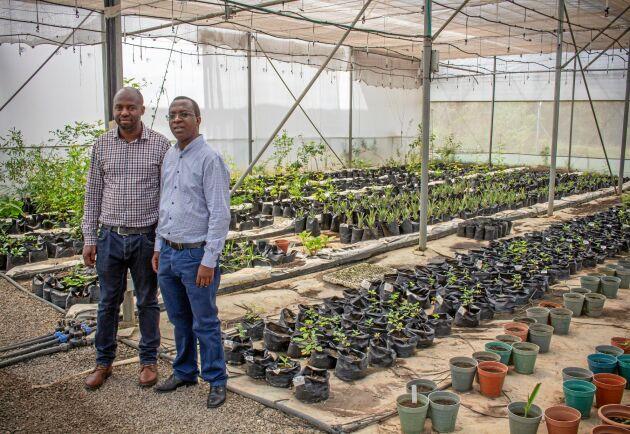 Letar tåliga plantor. Forskarna Lee Mudenda (vänster) och Stephen Syampungani undersöker vilka växter som kan användas för att dränera jordbruksmark från metallföroreningar och ansvarar på plats i Zambia för experiment kring växters tålighet mot tungmetallföroreningar.