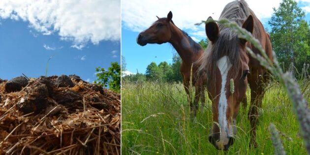 Hästägare riskerar hårdare regler kring gödsel