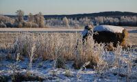 Risk för frusna grödor i Östergötland