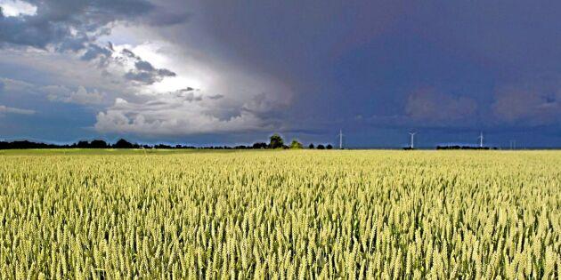 Jordbruksverket: Gör fyraårsplan för lantbrukets klimatarbete