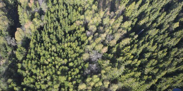 Nya skogsägare ökar variationen