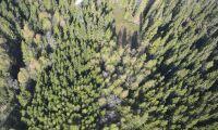 Sveaskog säljer skogsfastigheter