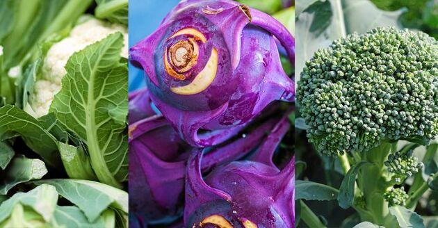 Blomkål, kålrabbi, broccoli. Det går att äta alla kålblad, även stocken!