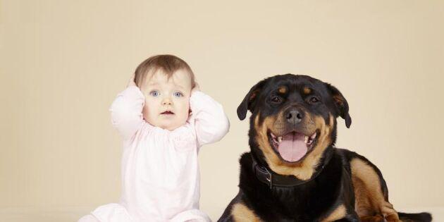 Harry, Sigge eller Lennart? Barnens förnamn testkörs på hundarna