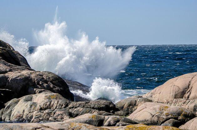 På västkusten, som här i Tjurpannans naturreservat, är havet större och saltare än på östkusten.