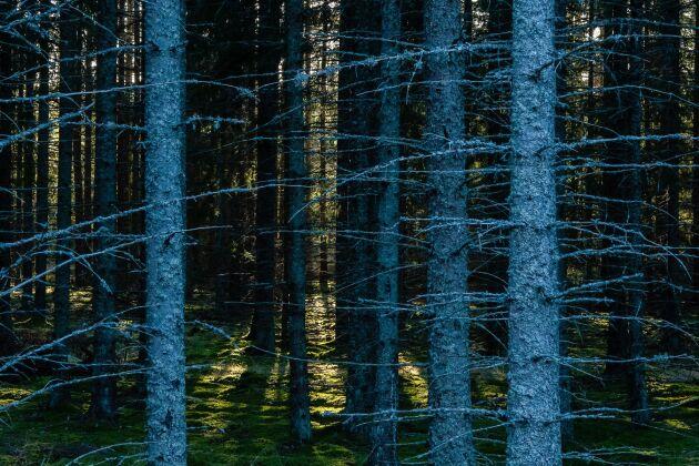 """""""Det är viktigt att se långsiktigt på en investering som Kalerum Skogar. Fastighetens skogsinnehav är relativt ungt även om det finns en hel del att slutavverka. Den köpare som har en längre tidshorisont på sin investering kommer att se en fantastisk virkestillväxt"""", säger Viktor Danielsson."""