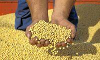 Tullkrig ökar USA:s sojaexport till EU
