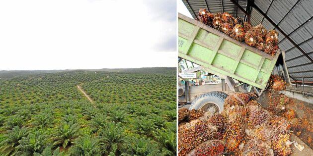 Här produceras kontroversiella palmoljan