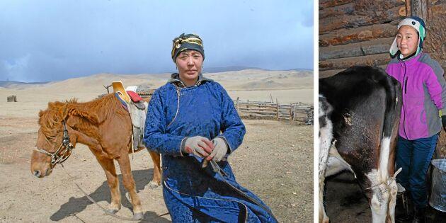 Från nomad till bofast mjölkbonde