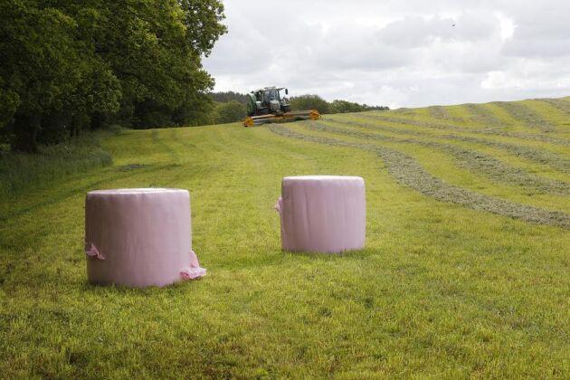 I år syntes rosa ensilagebalar runt om i landet. Nu kan de eventullt bli blå om testerna i Nya Zeeland går som det ska.